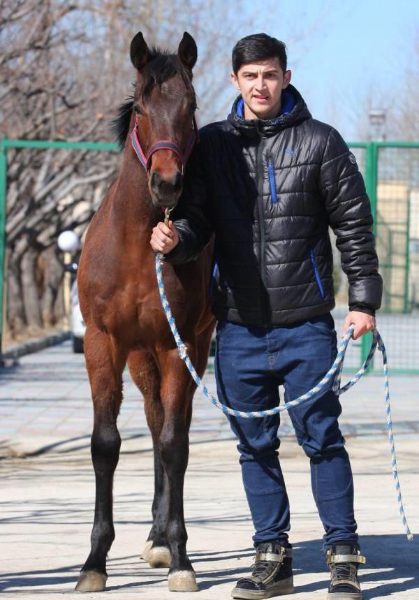 سردار-آزمون-و-اسب