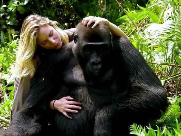 رابطه جنسی با حیوانات