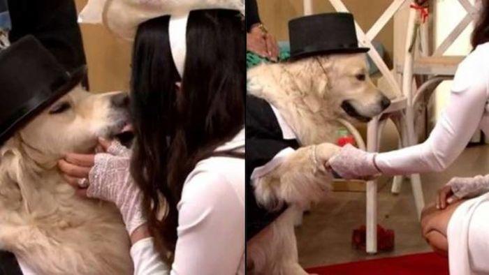 رابطه جنسی زن متاهل با یک سگ! / این زن بخاطر سگش از شوهرش طلاق گرفت+ عکس