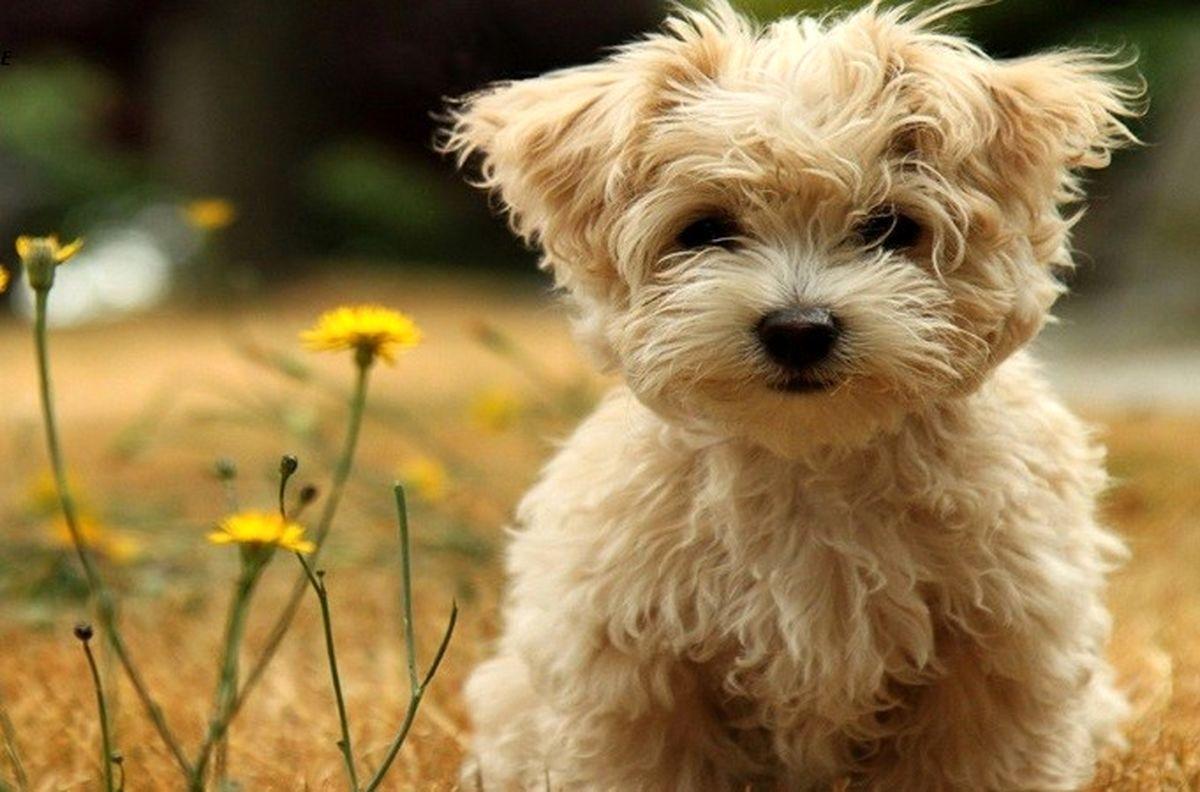 راهنمای انتخاب اسم سگ